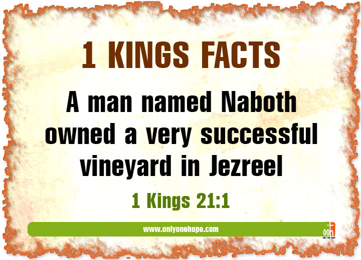 Kings-FACTS-4